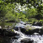 La rivière prend sa source en Espagne et se jette dans le Tech